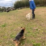 今年は暖冬うれしいね~ドックランのワンちゃん達♪(小型・中型・大型犬)その8編