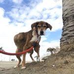 MIX犬の女の子の「ロッタちゃん」(16歳)が入園しました。編
