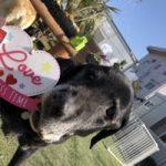 2月だよハートを飛ばそうバレンタイン♪(中型犬・大型犬)その8編