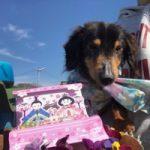 3月は桜咲くサク春ですよ〜♪(小型犬・中型犬)その3編