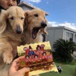 3月は桜咲くサク春ですよ〜♪(小型犬・中型犬)その2編
