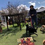 3月は桜咲くサク春ですよ〜♪(小型犬・中型犬)その4編