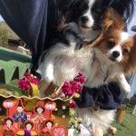 3月は桜咲くサク春ですよ〜♪(小型犬・中型犬)その1編