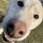 春一番が吹きました~ドックランのワンちゃん達♪(小型犬・中型犬・大型犬)その3編
