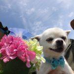 6月は雨降ってドックランの芝(芝生)ふえるシットリ季節の到来で~す♪(小型犬・中型犬)その1編