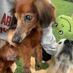 6月は雨降ってドックランの芝(芝生)ふえるシットリ季節の到来で~す♪(小型犬・中型犬)その6編