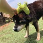 6月は雨降ってドックランの芝(芝生)ふえるシットリ季節の到来で~す♪(小型犬・中型犬・大型犬)その1編