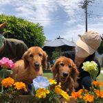 6月は雨降ってドックランの芝(芝生)ふえるシットリ季節の到来で~す♪(小型犬・中型犬)その4編