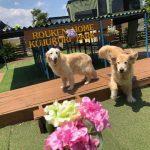6月は雨降ってドックランの芝(芝生)ふえるシットリ季節の到来で~す♪(小型犬・中型犬・大型犬)その3編