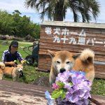 6月は雨降ってドックランの芝(芝生)ふえるシットリ季節の到来で~す♪(小型犬・中型犬)その7編