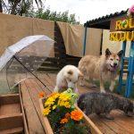 6月は雨降ってドックランの芝(芝生)ふえるシットリ季節の到来で~す♪(小型犬・中型犬)その5編