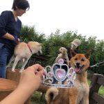 6月は雨降ってドックランの芝(芝生)ふえるシットリ季節の到来で~す♪(小型犬・中型犬・大型犬)その2編