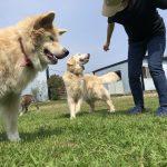 MIX犬の「モクくん」(16歳)が入園しました。(入園編)