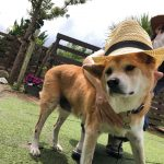 MIX犬の「源氏くん」(15歳)が入園しました。(入園編)