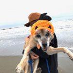 MIX犬の「やまとくん」(16歳)が入園しました。(入園編)
